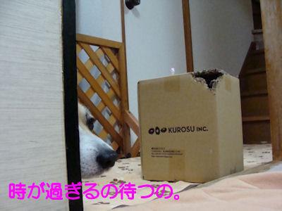 DSC06988b.jpg