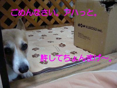 DSC06990b.jpg